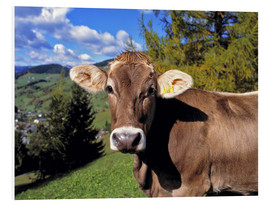 PVC-tavla  Cow in the Dolomites - Ric Ergenbright