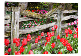 Akrylglastavla  Tulips in front of a wooden fence - Jamie & Judy Wild