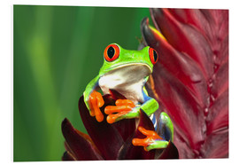 PVC-tavla  Red-eyed tree frog on leaf - Adam Jones