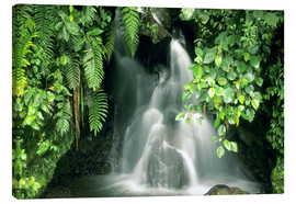 Canvastavla  Small waterfall in the rainforest - Kevin Schafer