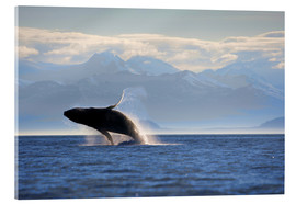 Akrylglastavla  Humpback whale jumps out of water - Paul Souders