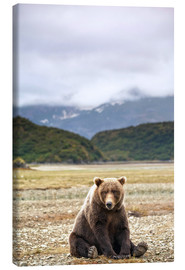 Canvastavla  Grizzly Bear is resting in front of Kinak Bay - Paul Souders