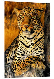 Akrylglastavla  Enthroned Leopard - Dave Welling