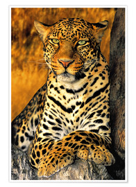 Premiumposter  Enthroned Leopard - Dave Welling