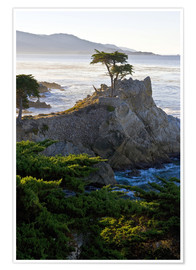Premiumposter  Lone cypress in California - Ralph H. Bendjebar