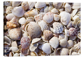 Canvastavla  Shell collection - Rob Tilley
