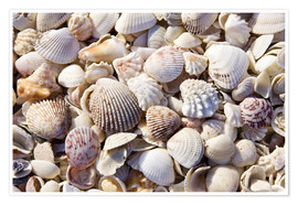 Premiumposter  Shell collection - Rob Tilley