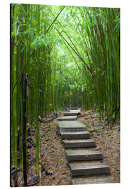 Aluminiumtavla  Wooden path in the bamboo forest - Jim Goldstein