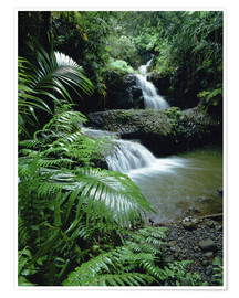 Premiumposter  Waterfall in Hawaii - Douglas Peebles