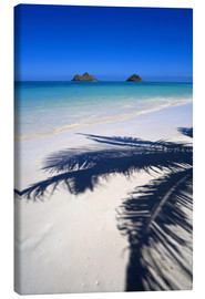 Canvastavla  Palm shadow on Lanikai Beach - Douglas Peebles
