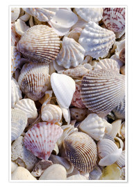 Premiumposter  Shells on the beach - Rob Tilley