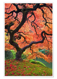 Poster Japanese maple in autumn