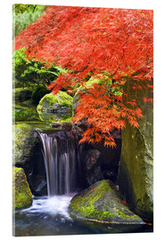 Akrylglastavla  Waterfall and Japanese Maple - Don Paulson