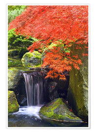 Premiumposter  Waterfall and Japanese Maple - Don Paulson