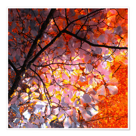 Premiumposter autumn tree I