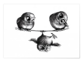 Poster  Three owls - high wire act - Stefan Kahlhammer