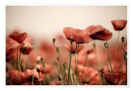 Poster  Red Poppy Flowers 05 - Nailia Schwarz