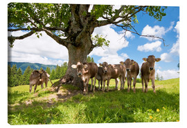 Canvastavla  Young Cows - Jan Schuler
