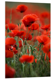 PVC-tavla  Poppy Meadow - Nailia Schwarz