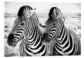 Akrylglastavla  Two Zebras - Jan Schuler
