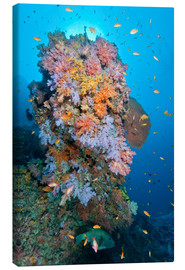 Canvastavla  Colourful reef scene - Mathieu Meur
