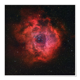 Premiumposter The Rosette Nebula