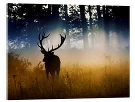 Akrylglastavla  Red deer in the subtle light - Alex Saberi