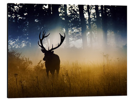 Aluminiumtavla  Red deer in the subtle light - Alex Saberi