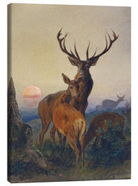 Canvastavla  A Stag with Deer at Sunset - Charles Jones