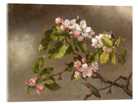 Akrylglastavla  Apple Blossoms and a Hummingbird - Martin Johnson Heade