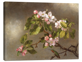 Canvastavla  Apple Blossoms and a Hummingbird - Martin Johnson Heade