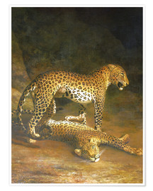 Premiumposter  Two Leopards lying in the Exeter Exchange - Jacques Laurent Agasse