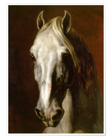 Premiumposter Head of a white horse