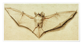 Premiumposter  Bat with spread wings - Hans Holbein d.J.