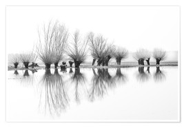 Premiumposter Willow trees in the mirror image of the flood