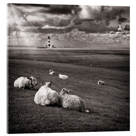 Akrylglastavla  Talking Sheep - Carsten Meyerdierks