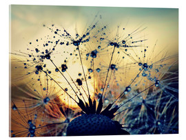 Akrylglastavla  Dandelion in the sunset - Julia Delgado