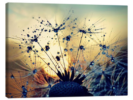 Canvastavla  Dandelion in the sunset - Julia Delgado