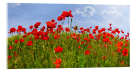 Akrylglastavla  Poppies Panoramic - Melanie Viola