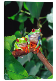 Canvastavla  Rotaugenlaubfrosch-couple - David Northcott