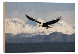 Trätavla  Bald eagle in flight - David Northcott