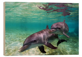 Trätavla  Two bottlenose dolphins from the beaches of the Caribbean - Stuart Westmorland