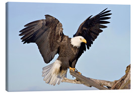 Canvastavla  Eagle with outstretched wings - Charles Sleicher