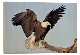 Trätavla  Eagle with outstretched wings - Charles Sleicher