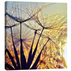Canvastavla  Dandelion in the sunset III - Julia Delgado