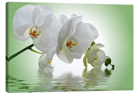 Canvastavla  Orchid with Reflection - Atteloi