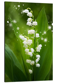 Aluminiumtavla  Lily of the valley - Steffen Gierok