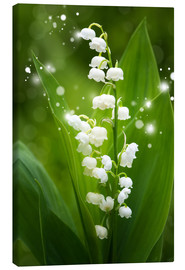 Canvastavla  Lily of the valley - Steffen Gierok