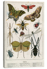 Canvastavla  Insects - English School