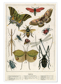 Premiumposter  Insects - English School
